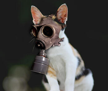 Cat-Gas-Mask.jpg
