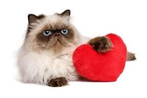 Cat-Heartworms-Suck