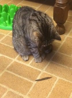 Cat-Smudge-Slug