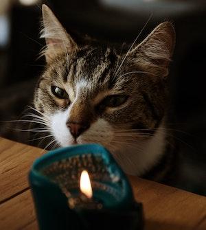 Cat-lit-candle.jpg