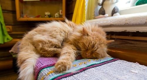 Cat sleeping on windowsill.jpg