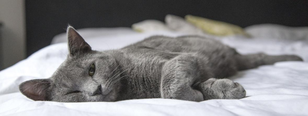 Cat-urinary-obstruction-survey.jpg