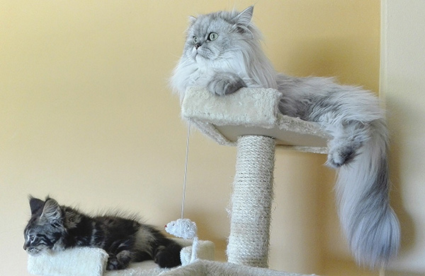Cats On Cat Stand Scratching Posts