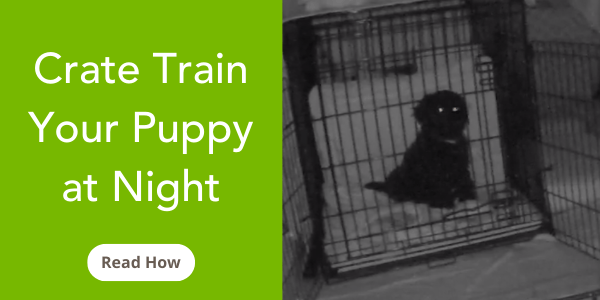 how to crate train your puppy at night