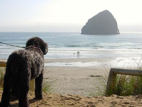 beau-at-the-beach-2