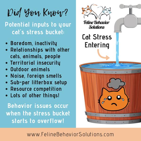 Cat Stress Bucket