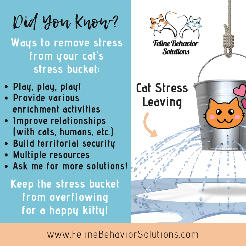 DYK6 - Stress Bucket Out