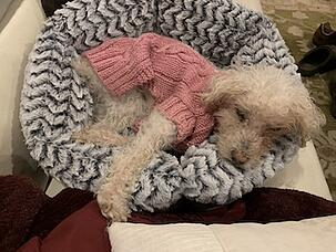 Daisy in Soho Round Bed