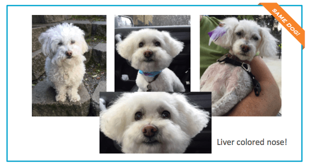 Daisy-photo-lost-pet.png