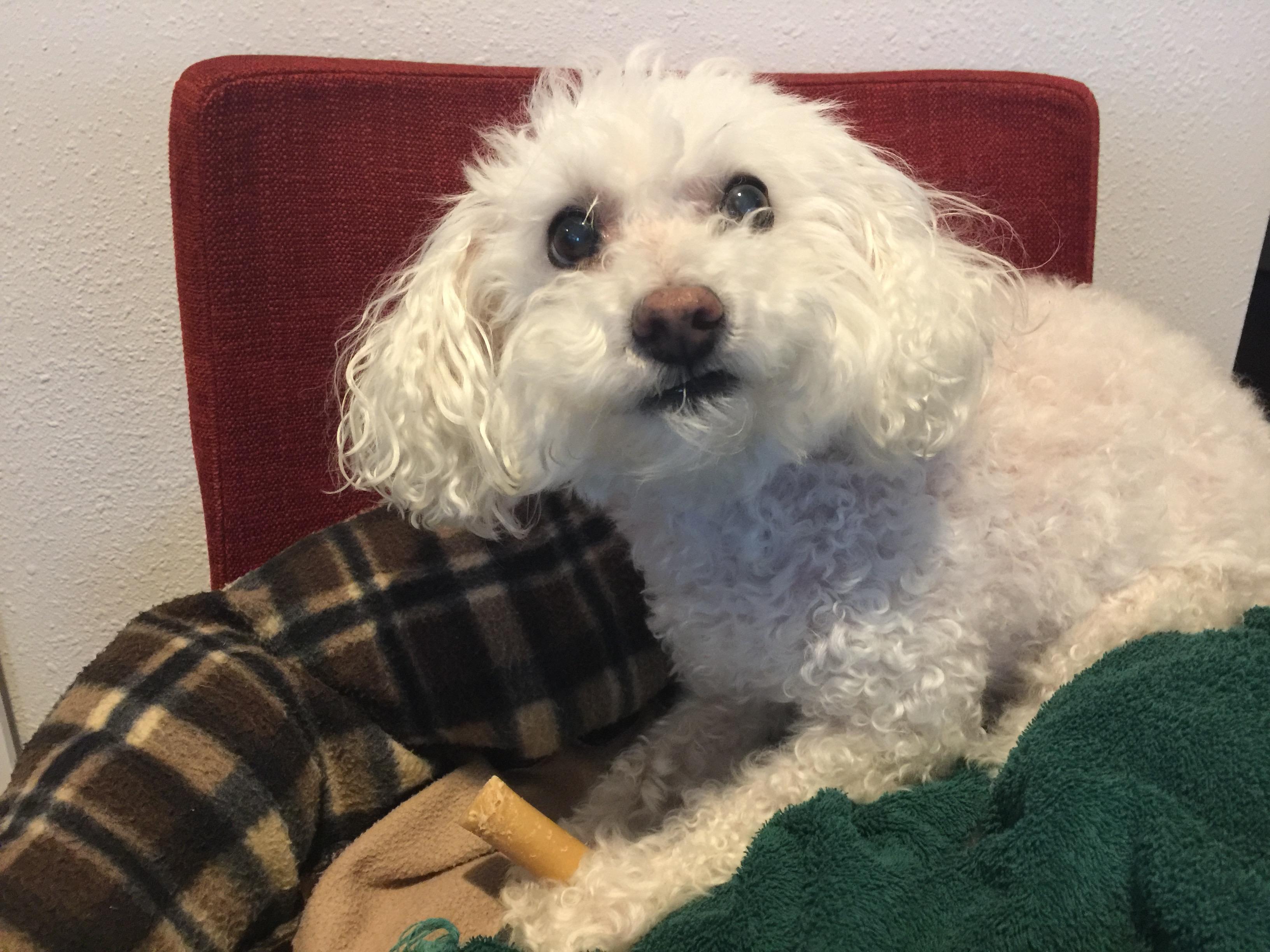 Daisy-testing-dog-chew.jpg