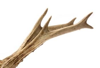 Deer Antler Chew