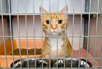 Cat in Large Crate