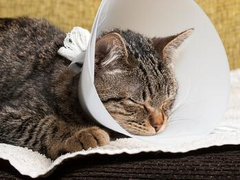 Cat With E-Collar Cone