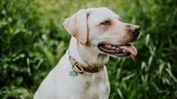 Dog Outside Grass-350