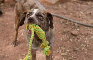 Dog With Rope Toy