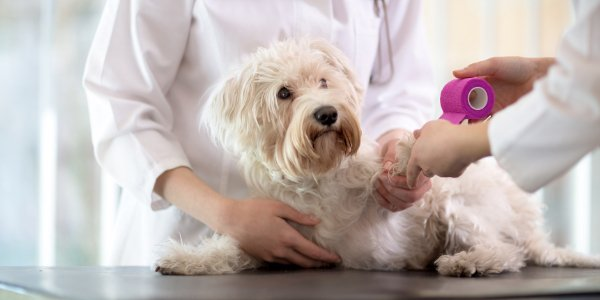 Dog getting leg wound wrapped by veterinarian