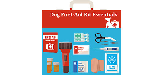 Dog-First-Aid-Essentials