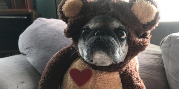 Dog-Halloween-Mabel