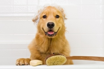 Dog-Pet-Shampoo.jpg