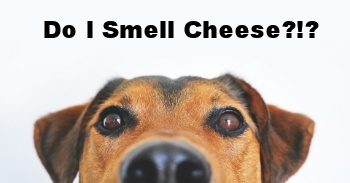 Dog-Smell-Cheese.jpg