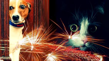 Dog-cat-noise-phobias-Hot-Topic