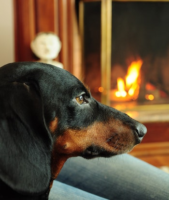 Dog-fireplace-heater.jpg