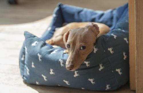 Dog-in-dog-bed.jpg