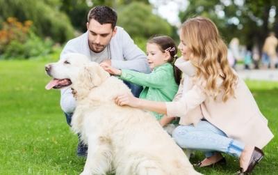 Dog-introduction-child-adults.jpg