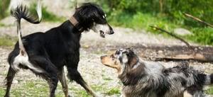 Dog-park-play-landing