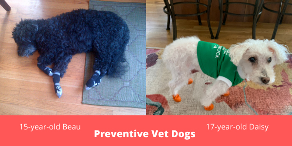 Dog socks booties indoors for arthritis mobility