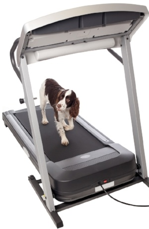 Dog-treadmill-exercise.jpg
