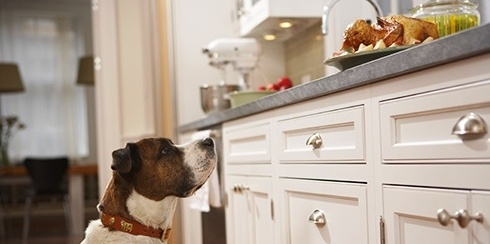Dog-turkey-on-counter