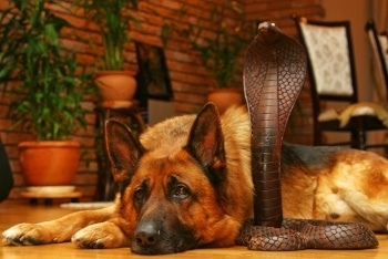 Dog-wooden-cobra-snake.jpg