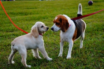 Dogs Leash Nose to Nose.jpg