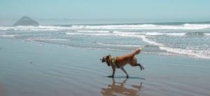 Dogs-at-beach-sun-landing