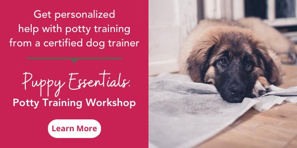 puppy potty training workshops
