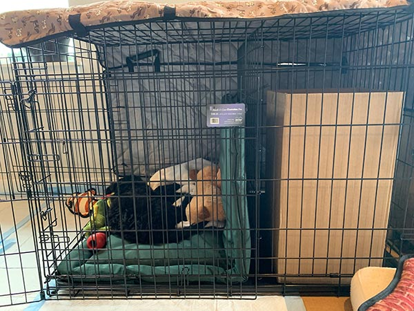 Finns puppy sized crate