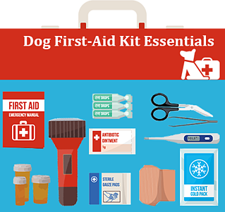 Dog First Aid Essentials