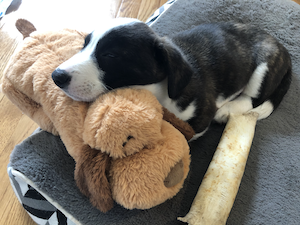 Fozzie with Snuggle Puppy