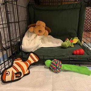 put a Snuggle Puppy in their crate