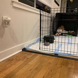 put adaptil calming diffuser near crate
