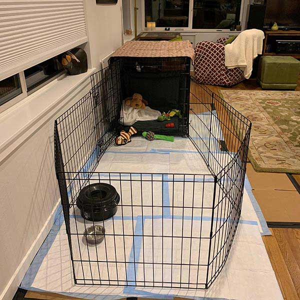 Finnegans puppy playpen