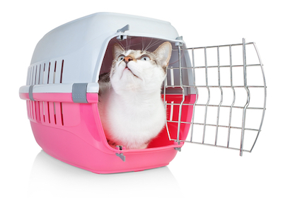 cat in carrier being adopted