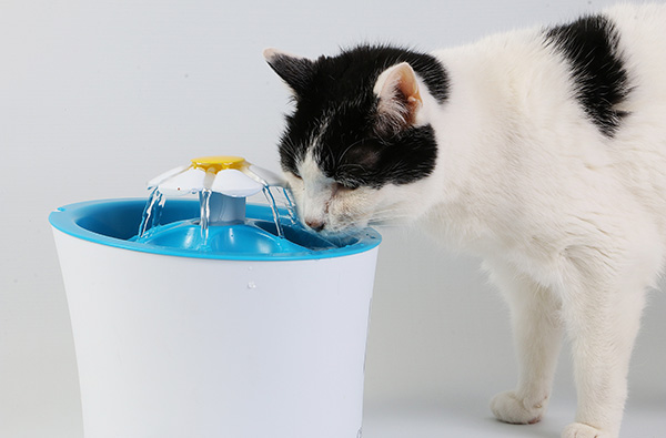 cat-drinking-fountain