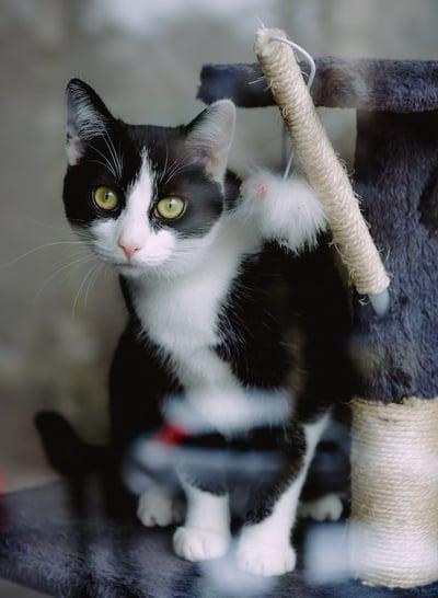 cat-losing-weight