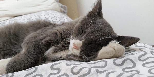 cat-with-UTI-peaceful-rest