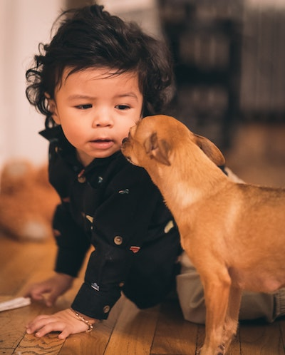 child-and-chihuahua
