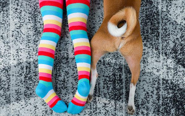 child-dog-on-carpet