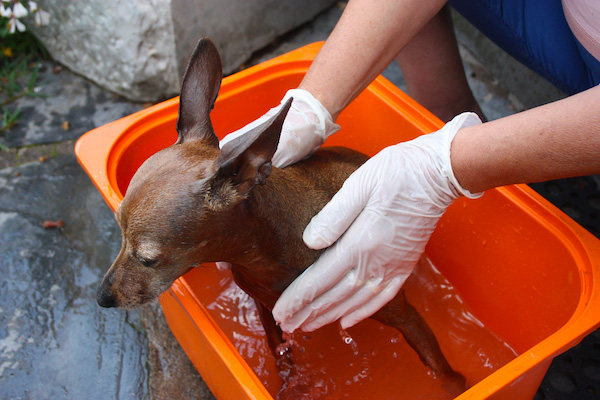 dog-bath-using-gloves
