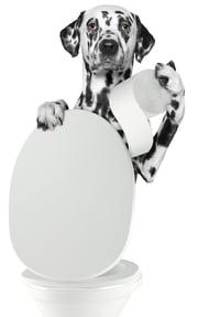 dog-going-pee-how-often